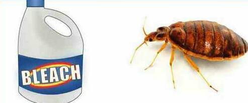 Does Bleach Kill Bed Bugs