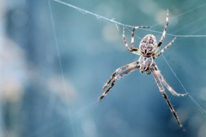 Which Are The Spiders That Eat Bed Bugs?
